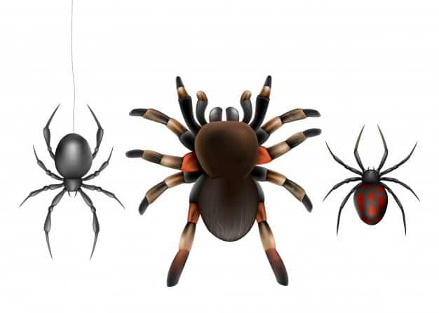 דוגמאות עכבישים